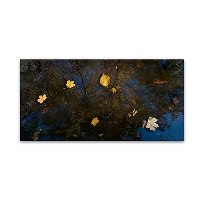 Trademark Fine Art KS0147-C1019GG Autumn Leaves Floating By by Kurt Shaffer 10 x 19 FRMLS Art