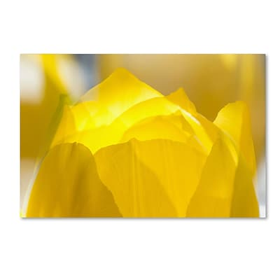 Trademark Fine Art KS0156-C2232GG Yellow Tulip Double Exposure by Kurt Shaffer 22 x 32 FRMLS Art