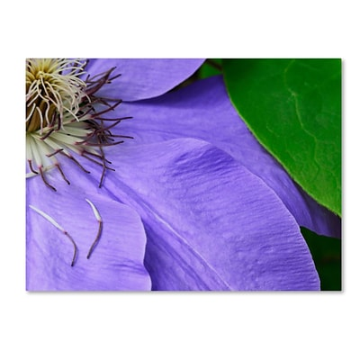Trademark Fine Art KS0165-C1419GG Clematis Abstract by Kurt Shaffer 14 x 19 Frameless Art