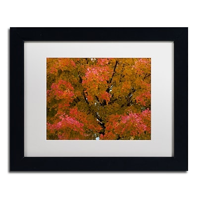 Trademark Fine Art KS0137-B1114MF Autumn Maple Splendor by Kurt Shaffer 11 x 14 FRM Art, WHT MTD