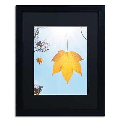Trademark Fine Art KS0146-B1620BMF Autumn Leaf in the Sun by Kurt Shaffer 16x20 FRM Art, BLK MTD
