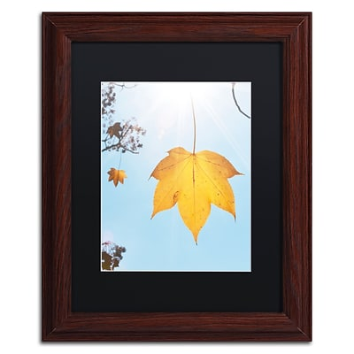 Trademark Fine Art KS0146-W1114BMF Autumn Leaf in the Sun by Kurt Shaffer 11x14 FRM Art, BLK MTD