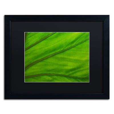 Trademark Fine Art Green Elephant Ear Abstract by Kurt Shaffer 16x20 FRM Art, BLK MTD