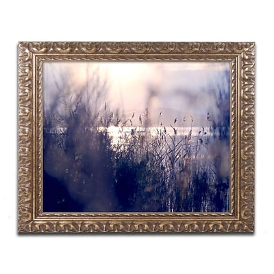 Trademark Fine Art BC0116-G1620F Afternoon Glory by Beata Czyzowska Young 16 x 20 Framed Art