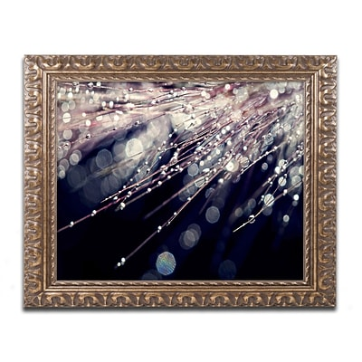 Trademark Fine Art BC0129-G1620F Little Wonders by Beata Czyzowska Young 16 x 20 Framed Art
