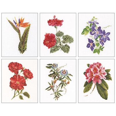 Thea Gouverneur TG3081 Multicolor 8x6.75 Floral Studies 1 On Aida Counted Cross Stitch Kit, 6/Set