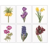 Thea Gouverneur TG3083A Multicolor 8x6.75 Floral Studies 3 On Aida Counted Cross Stitch Kit, 6/Set