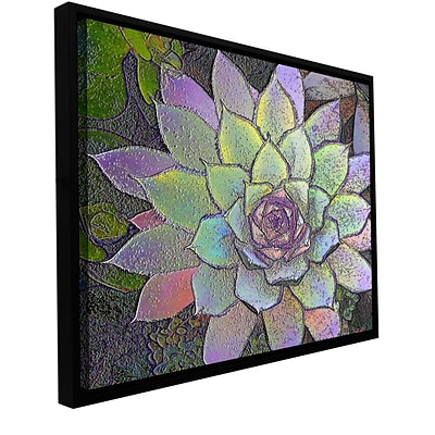 ArtWall Arco Iris Suculento Gallery-Wrapped Canvas 18 x 24 Floater-Framed (0uhl004a1824f)
