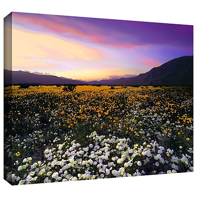 ArtWall Borrego Desert Spring Gallery-Wrapped Canvas 14 x 18 (0uhl023a1418w)
