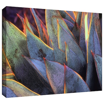 "ArtWall 'sun Succulent' Gallery-Wrapped Canvas 36"" x 48"" (0uhl038a3648w)"