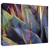 ArtWall Sun Succulent Gallery-Wrapped Canvas 36 x 48 (0uhl038a3648w)