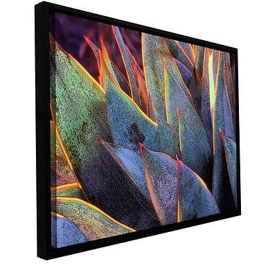 ArtWall Sun Succulent Gallery-Wrapped Canvas 36 x 48 Floater-Framed (0uhl038a3648f)