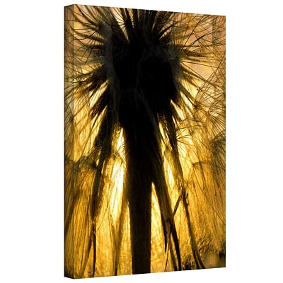 ArtWall Heart of a Lion-Dandelion Gallery-Wrapped Canvas 14 x 18 (0uhl053a1418w)