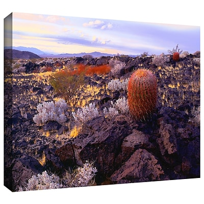 ArtWall In The Mojave Gallery-Wrapped Canvas 24 x 32 (0uhl110a2432w)