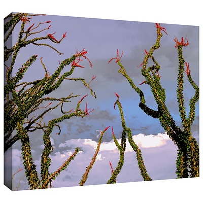 ArtWall Yuma Desert Spring Gallery-Wrapped Canvas 24 x 32 (0uhl121a2432w)