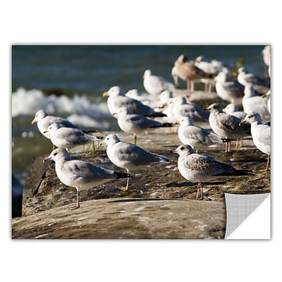 ArtWall Pigeons Art Appeelz Removable Graphic Wall Art 12 x 18 (0yor049a1218p)