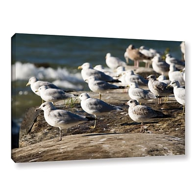 ArtWall Pigeons Gallery-Wrapped Canvas 12 x 18 (0yor049a1218w)