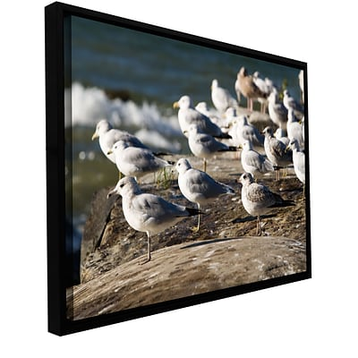 ArtWall Pigeons Gallery-Wrapped Canvas 32 x 48 Floater-Framed (0yor049a3248f)