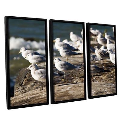 ArtWall Pigeons 3-Piece Canvas Set 36 x 54 Floater-Framed (0yor049c3654f)