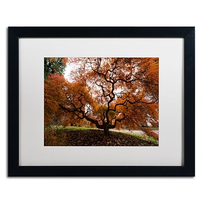 Trademark Fine Art Kurt Shaffer Autumn Japanese Maple Tree 16 x 20 (KS01021-B1620MF)