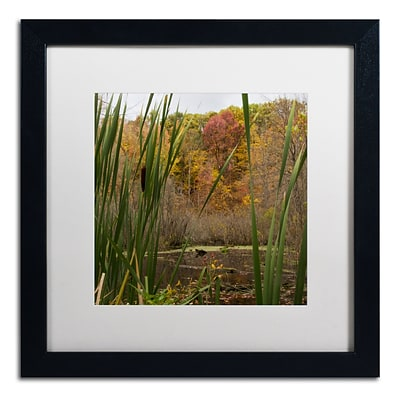 Trademark Fine Art Kurt Shaffer Autumn Marsh 16 x 16 (KS01022-B1616MF)
