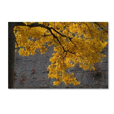 Trademark Fine Art Kurt Shaffer Golden Autumn Color 16 x 24 (KS01035-C1624GG)