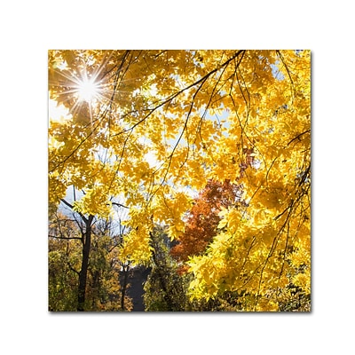 Trademark Fine Art Kurt Shaffer Sunny Happy Autumn Day 24 x 24 (KS01049-C2424GG)