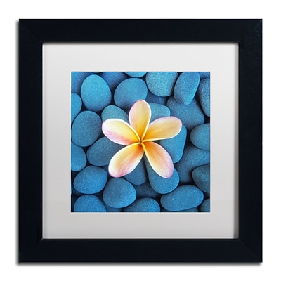 Trademark Fine Art David Evans Plumeria & Pebbles 6 11 x 11 (DE0116-B1111MF)