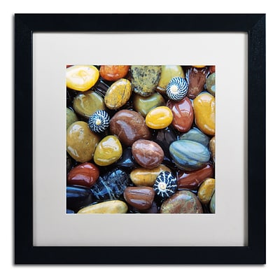 Trademark Fine Art David Evans Shells & Pebbles 16 x 16 (DE0118-B1616MF)