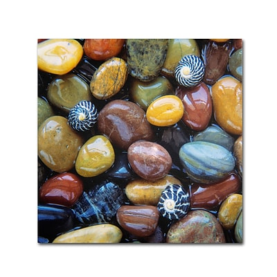 Trademark Fine Art David Evans Shells & Pebbles 24 x 24 (DE0118-C2424GG)