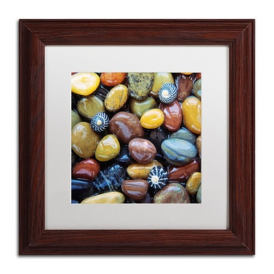 Trademark Fine Art David Evans Shells & Pebbles 11 x 11 (DE0118-W1111MF)