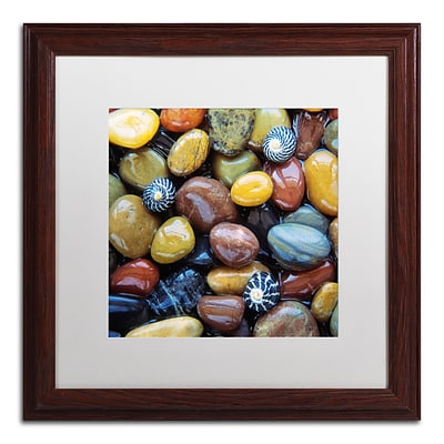 Trademark Fine Art David Evans Shells & Pebbles 16 x 16 (DE0118-W1616MF)