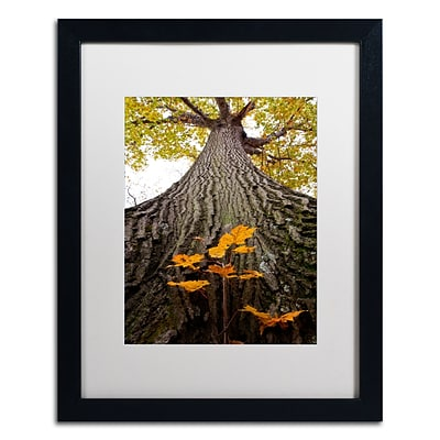Trademark Fine Art Kurt Shaffer Aspiring to New Heights 16 x 20 (KS0138-B1620MF)