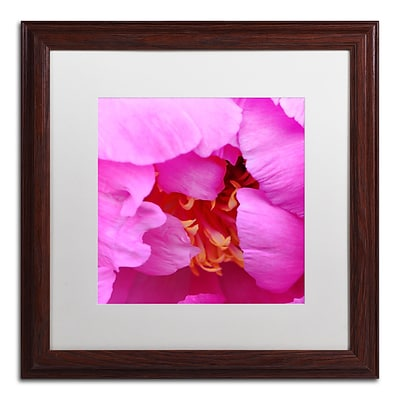 Trademark Fine Art Kurt Shaffer Tree Peonie Opening 16 x 16 (KS0187-W1616MF)