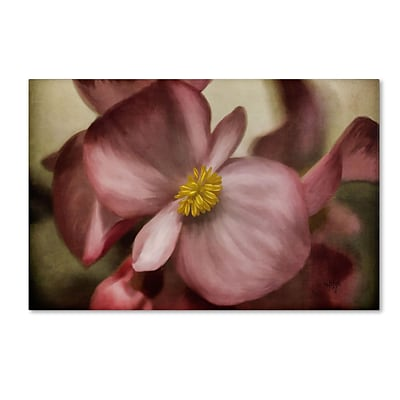 Trademark Fine Art Lois Bryan Dewy Pink Painted Begonia 30 x 47 (LBR0248-C3047GG)