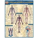 BarCharts, Inc. QuickStudy® Anatomy Reference Set (9781423230397)
