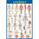BarCharts, Inc., QuickStudy® Anatomy Poster Reference Set (9781423230717)
