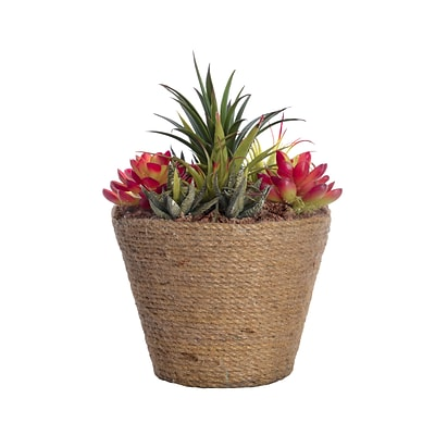 Laura Ashley 10.5 Tall Succulents in 8.5W x 8.5D Hemp Rope Container (VHA102444)