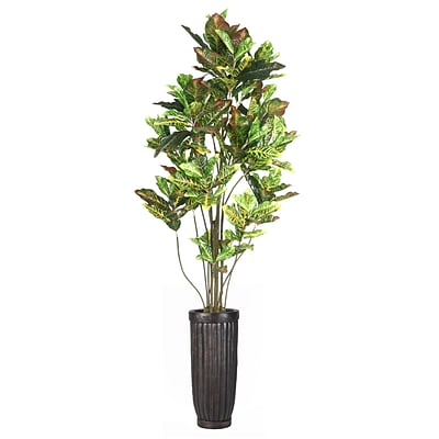 Laura Ashley 93 Tall Croton Tree with Multiple Trunks in Planter (VHX110214)