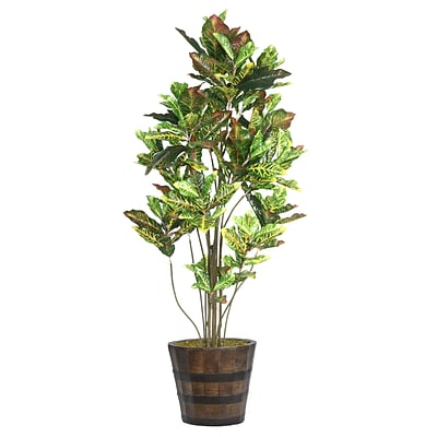 Laura Ashley 80 Tall Croton Tree with Multiple Trunks in Planter (VHX110216)