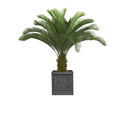 Laura Ashley 54 Tall Cycas Palm Tree in Planter