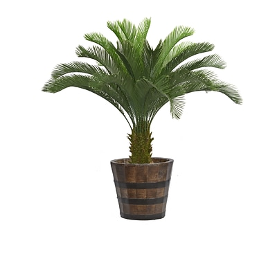 Laura Ashley 56 Tall Cycas Palm Tree in Planter