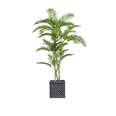 Laura Ashley 78 Tall Palm Tree in Planter (VHX112215)