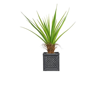 Laura Ashley 50 Tall Agave Tree with Cocoa Skin in Planter (VHX115215)