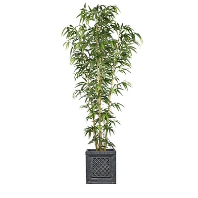 Laura Ashley 78 Bamboo Tree in Natural Poles in Planter (VHX116215)
