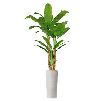 Laura Ashley 93 Tall Banana Tree with Real Touch Leaves in Planter (VHX117218)