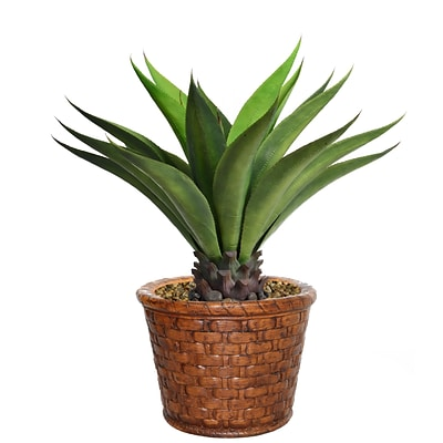 Laura Ashley 37 Tall Giant Aloe in Planter (VHX120206)