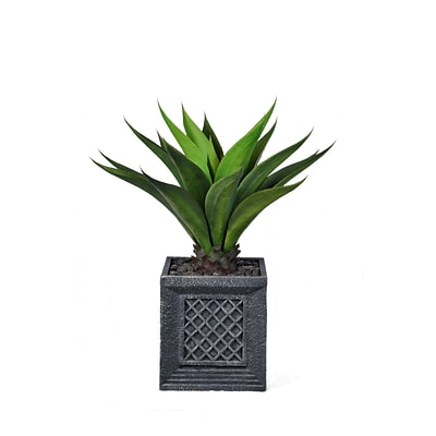 Laura Ashley 38 Tall Giant Aloe in Planter (VHX120215)