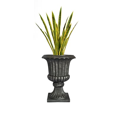 Laura Ashley 49 Tall Snake Plant in Planter (VHX121208)