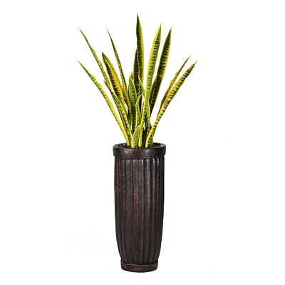 Laura Ashley 56 Tall Snake Plant in Planter (VHX121214)